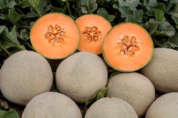 melon-house-fair-cantaloupe-karameza-02