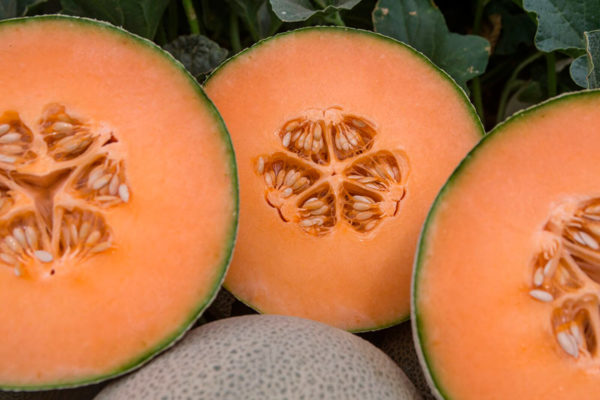 melon-house-fair-cantaloupe-kazta-02