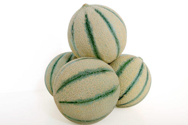 melon-house-fair-cantaloupe-ketzal-03