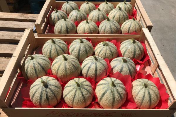 melon-house-fair-charentais-makeba-04
