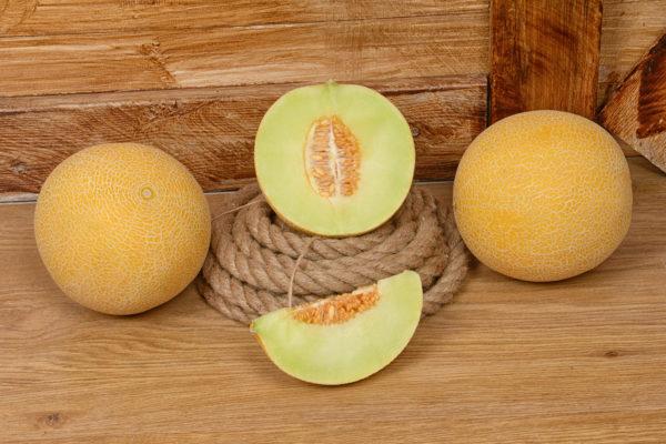 melon-house-fair-galia-abisal-03