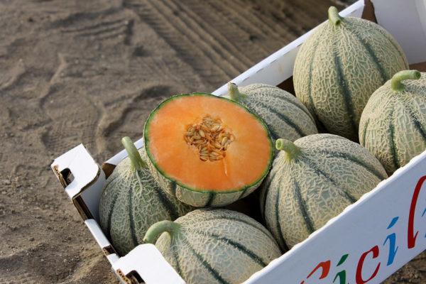 melon-house-fair-italian-netted-aiace-03