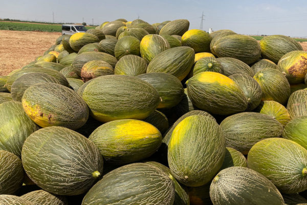 melon-house-fair-piel-de-sapo-alcarez-03