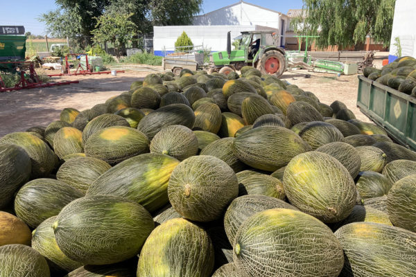 enza-zaden-melon-house-fair-piel-de-sapo-almaden-01