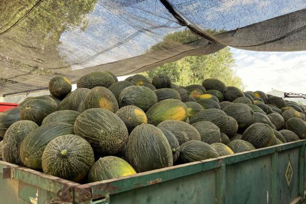 enza-zaden-melon-house-fair-piel-de-sapo-almaden-11