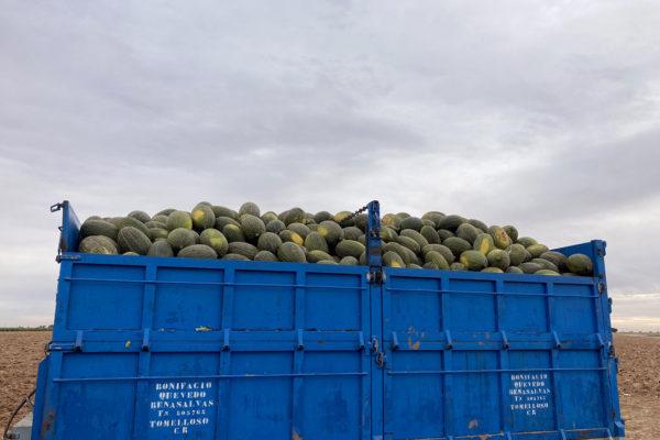 enza-zaden-melon-house-fair-piel-de-sapo-almaden-13