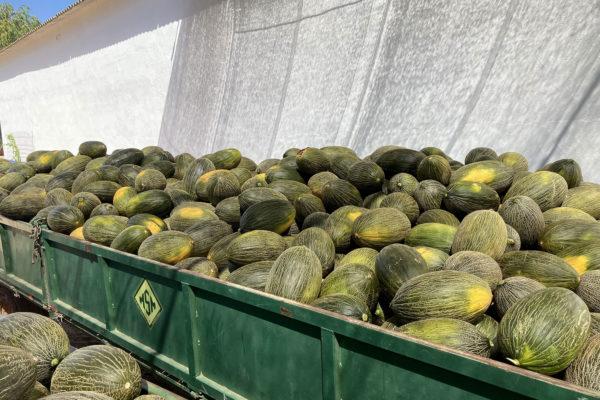 enza-zaden-melon-house-fair-piel-de-sapo-almaden-15