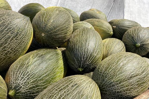 enza-zaden-melon-house-fair-piel-de-sapo-almaden-16