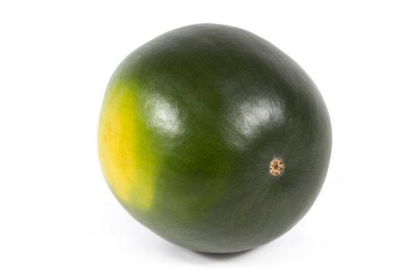 enza-zaden-melon-house-fair-watermelon-tyrion-02
