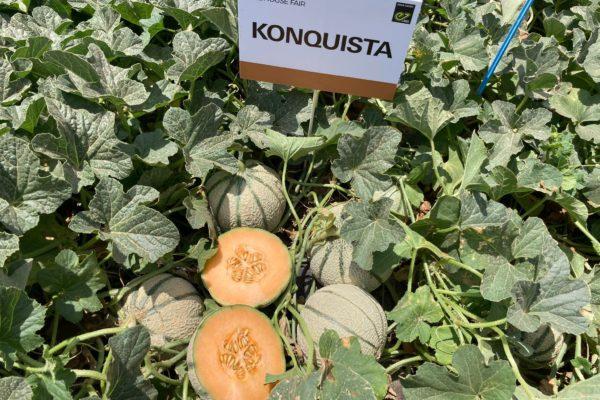 Melon House Fair - Konquista