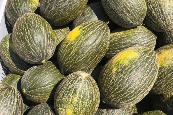 melon-house-fair-piel-de-sapo-campuzano